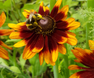 Gardening for Pollinators: All Things Buzzing and Beautiful!