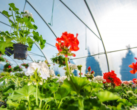 L7 Certificate in Nursery Stock Production, Botanic Gardens Dublin (10 Credits)
