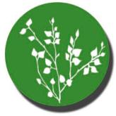 Horticulture cut foliage