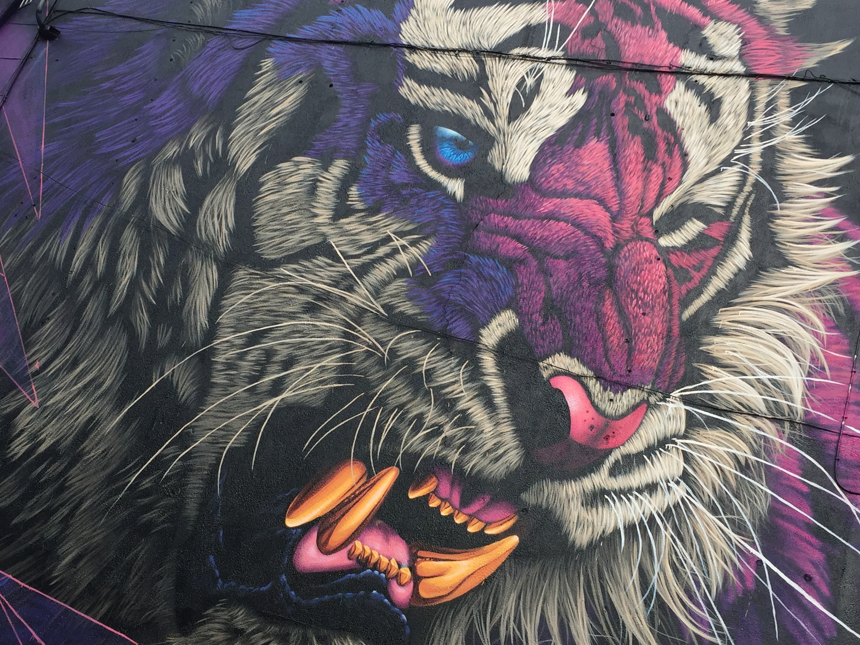 Pictured is a Waterford Walls mural 'Electric Fury' by Sonny. Photo: WIT