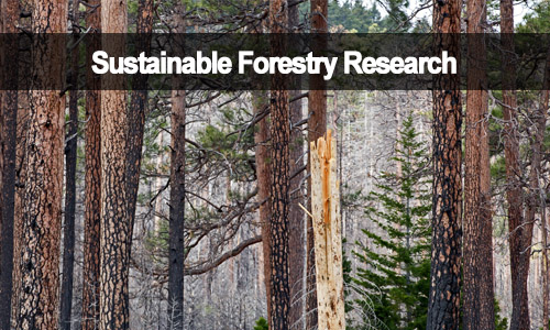 Sustainable Forestry Research